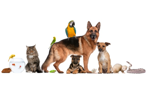 Sarasota Veterinary Clinic Staff Dogs Cats Birds Reptile Rodent Pocket Pets