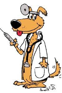 Sarasota Vet Animal Medical Veterinary Pre Anesthesia Blood testing